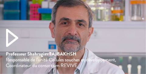 Professeur Shahragim TAJBAKHSH